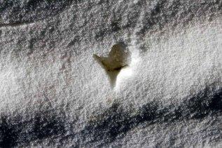 Kranichspuren im Schnee (c) Frank Koebsch (2)