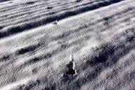 Kranichspuren im Schnee - kurz vor dem Abheben (c) Frank Koebsch