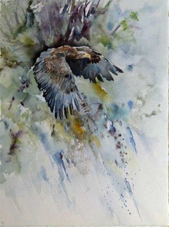 Majestätisch (c) ein Aquarell mit einem Seeadler von Hanka Koebsch