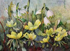 Der Frühling lässt sich nicht mehr aufhalten (c) Aquarell mit Winterlingen und Märzenbecher von Frank Koebsch
