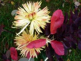 Strauß mit Chrysanthemen (c) Frank Koebsch