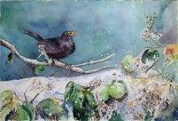 Noch mehr Schnee (c) Aquarell mit einer Amsel von Hanka Koebsch