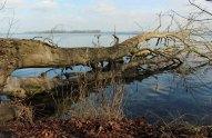 Motive am Ufer der Schweriner See im Schlosspark Wiligrad (c) Frank Koebsch (1)