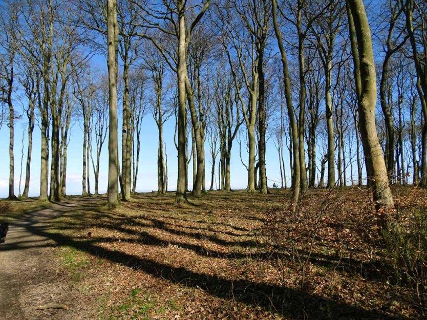 Gespensterwald bei Nienhagen im Frühling (c) Hanka Koebsch (1)