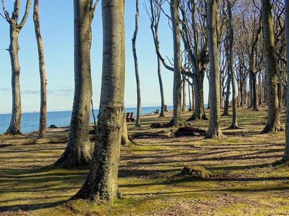 Gespensterwald bei Nienhagen im Frühling (c) Hanka Koebsch (4)