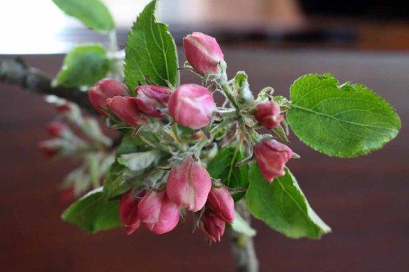 Apfelblüten in der Ausstellung von Hanka u Frank Koebsch im Schloß Griebenow