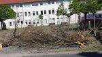 Baumreste nach dem Tornado vor der Grundschule Bützow (c) Frank Koebsch