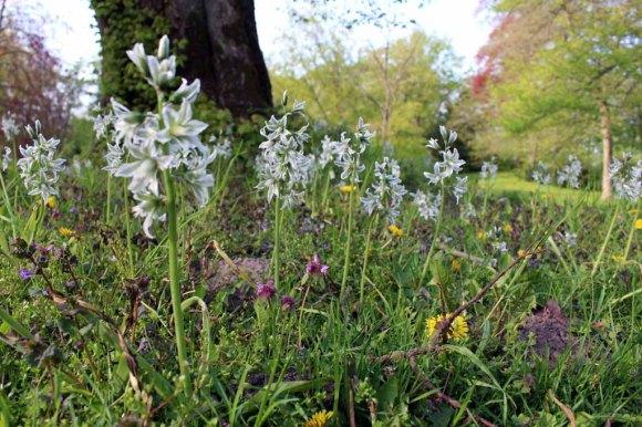 Frühling auf der Wiese im Schloßpark Griebenow (c) Frank Koebsch (1)