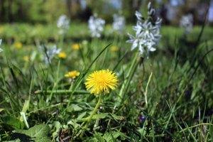 Frühling auf der Wiese im Schloßpark Griebenow (c) Frank Koebsch (3)