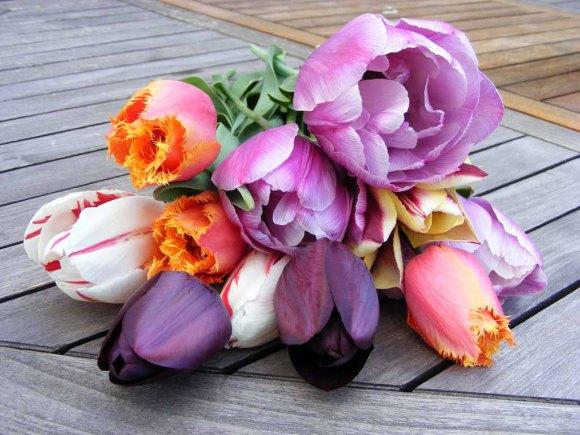 Wunderbarer Tulpenstrauß (c) Frank Koebsch