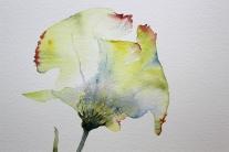 Aquarell der Kunstblume Lore (c) Hanka Koebsch (2)