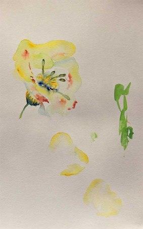 Erste Versuche die Kunstblume Lore als Aquarell zu erfassen (c) Hanka Koebsch