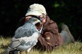 Fotoworkshop mit Greifvögeln in Zingst (c) Frank Koebsch (1)