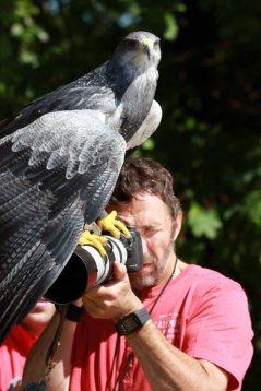 Fotoworkshop mit Greifvögeln in Zingst (c) Frank Koebsch (2)