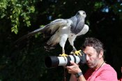 Fotoworkshop mit Greifvögeln in Zingst (c) Frank Koebsch (3)