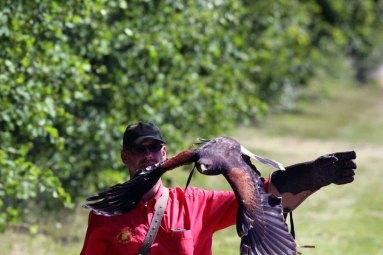 Fotoworkshop mit Greifvögeln in Zingst (c) Frank Koebsch (5)
