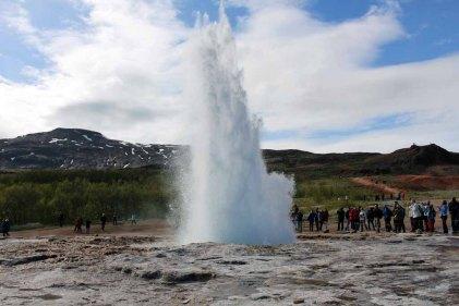 Gesire auf Island (c) Frank Koebsch