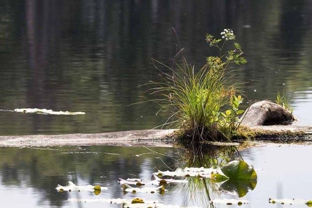 Biotop als Stillleben am Schweingarten See (c) Frank Koebsch (1)
