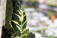 Biotop als Stillleben am Schweingarten See (c) Frank Koebsch (2)