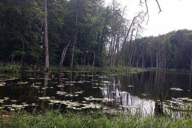 Blick auf den Schweingarten See (c) Frank Koebsch