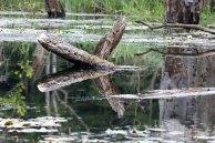 Reflektionen auf dem Schweingarten See (c) Frank Koebsch