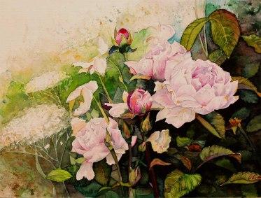 Rosenblüten - wunderbare aber vergängliche Schönheiten (c) Aquarell von Frank Koebsch