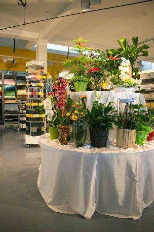 Blumenpräsente zurm 25jährigen Firmenjubiläum Heinr. Hünicke Rostock (c) Frank Koebsch