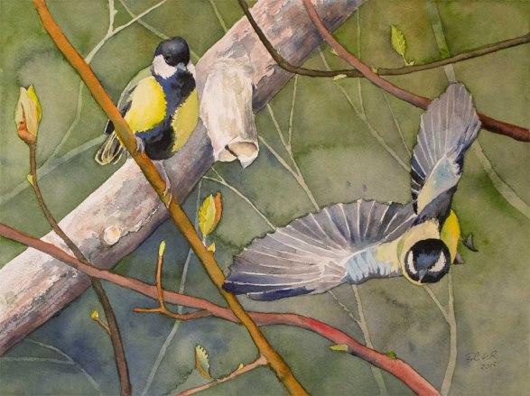 Entdecker (c) ein Meisen Aquarell von Frank Koebsch