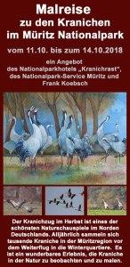 Malreise zu den Kranichen im Müritz Nationalpark 2018