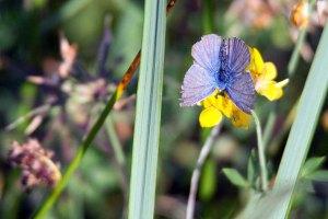 Schmetterlinge im Spätsommer an der Müritz (c) Frank Koebsch (3)