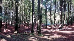 Buchenwald im Nationalpark Jasmund (c) Frank Koebsch