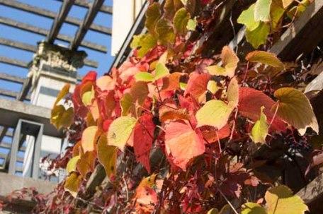 Bunte Blätter an den Schlossterrassen im Park von Putbus (c) Frank Koebsch (1)