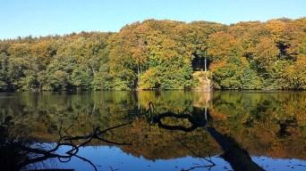 Herbst am Herthasee im Nationalpark Jasmund (c) Frank Koebsch (2)