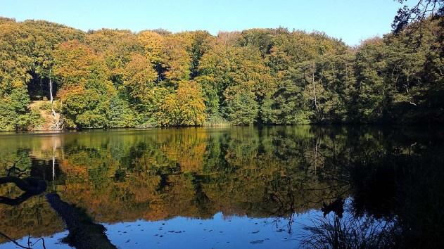 Herbst am Herthasee im Nationalpark Jasmund (c) Frank Koebsch (4)