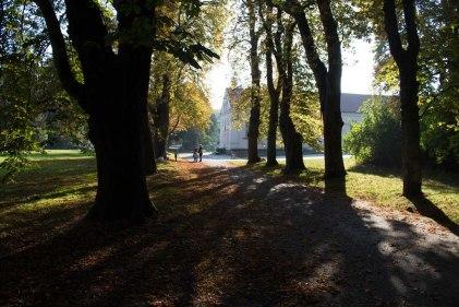 Kastanienallee im Park von Putbus (c) Frank Koebsch (1)