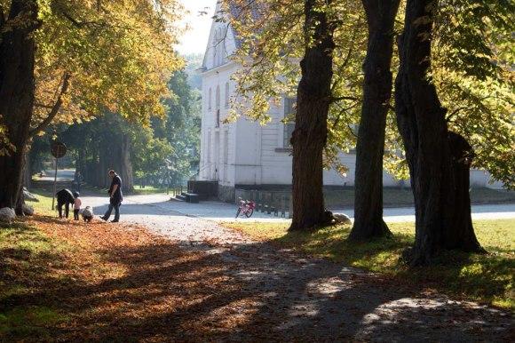 Kastanienallee im Park von Putbus (c) Frank Koebsch (2)