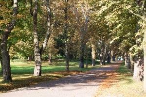 Kastanienallee im Park von Putbus (c) Frank Koebsch (4)