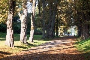 Kastanienallee im Park von Putbus (c) Frank Koebsch (7)