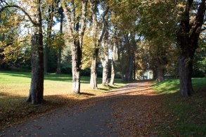 Kastanienallee im Park von Putbus (c) Frank Koebsch (8)