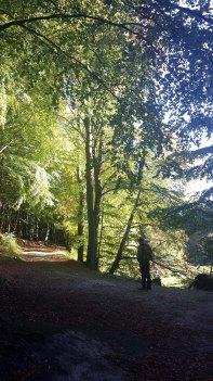 Licht der Herbstsonne in den Büchenwäldern im Nationalpark Jasmund (c) Frank Koebsch (1)