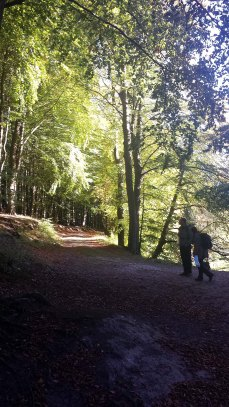 Licht der Herbstsonne in den Büchenwäldern im Nationalpark Jasmund (c) Frank Koebsch (2)