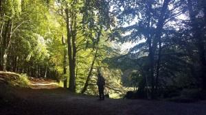 Licht der Herbstsonne in den Büchenwäldern im Nationalpark Jasmund (c) Frank Koebsch