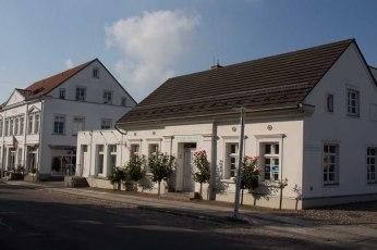Rosenstöcke verzaubern die Häuser in Putbus (c) Frank Koebsch