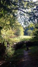 sonniger Herbst am Herthasee im Nationalpark Jasmund (c) Frank Koebsch (1)