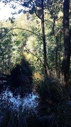 sonniger Herbst am Herthasee im Nationalpark Jasmund (c) Frank Koebsch (3)