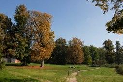 Sonniger Herbst im Park von Putbus (c) Frank Koebsch (1)