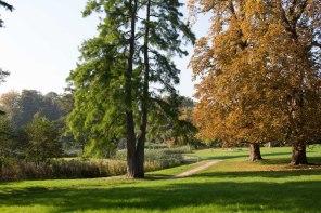 Sonniger Herbst im Park von Putbus (c) Frank Koebsch (4)