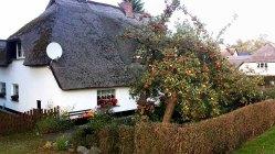 Apfelbaum im einem Bauerngarten von Middelhagen (c) Frank Koebsch