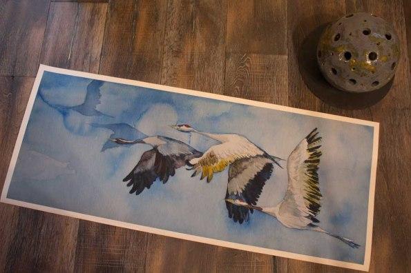 Duck des Kranich Aquarells - auf dem Weg nach Rügen - auf Hahnemühle Papier Albrecht Dürer (c) Frank Koebsch (3)