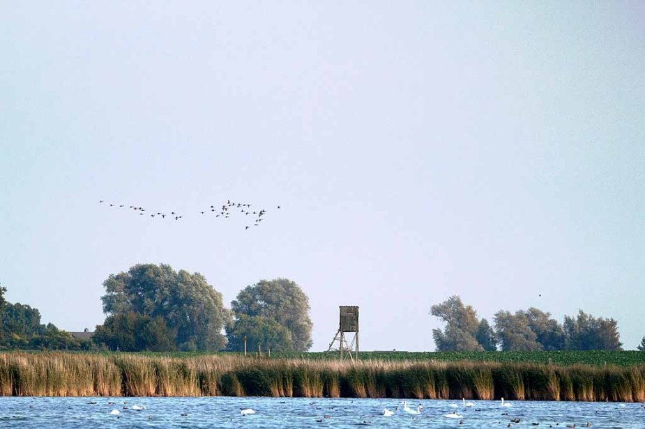 Herbstlicher Vogelzug über Middelhagen (c) Frank Koebsch